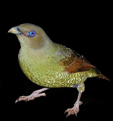 bird360