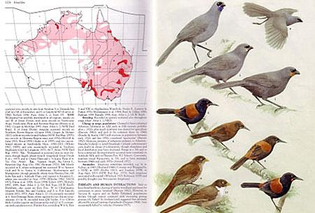 birdbookinside