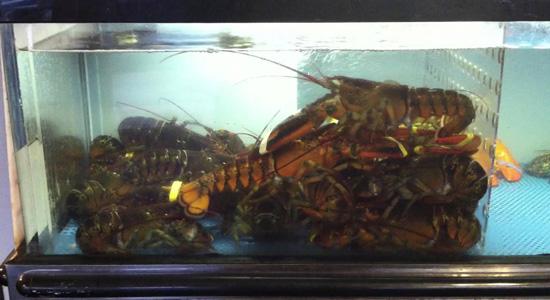 LobsterTank